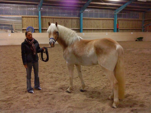 My new Haflinger Andor (&copy 2008 by Jolle)